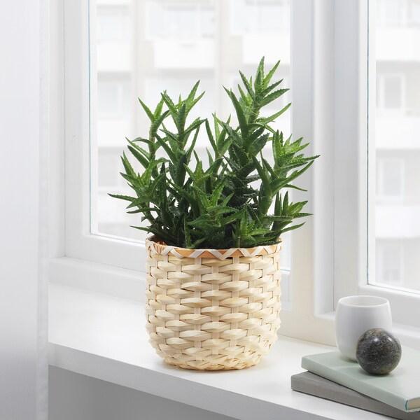 KAFFEBÖNA Kvetináč, bambus, 15 cm