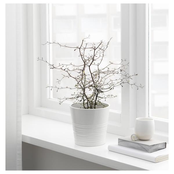 MUSKOT kvetináč biela 14 cm 15 cm 12 cm 14 cm