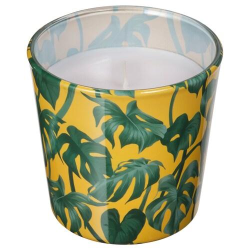 AVLÅNG unscented candle in glass Monstera/leaf green 7.5 cm 8 cm 25 hr