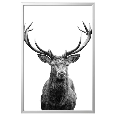 BJÖRKSTA Picture with frame, Horns/aluminium-colour, 118x78 cm