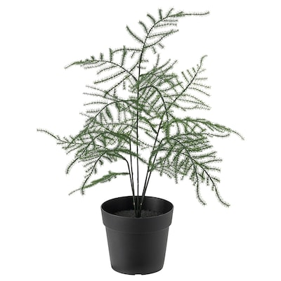 FEJKA Artificial potted plant, in/outdoor Asparagus, 9 cm