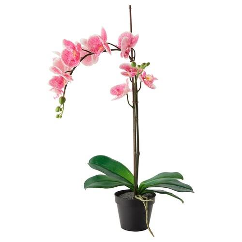 FEJKA artificial potted plant Orchid pink 12 cm 65 cm