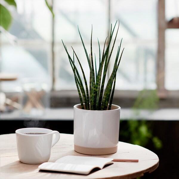 UPPVAKTA Plant pot, white/natural, 12 cm