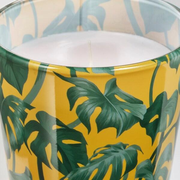 อ็อบลอง เทียนในถ้วยแก้ว Monstera/ใบไม้ เขียว 7.5 ซม. 8 ซม. 25 ชม.