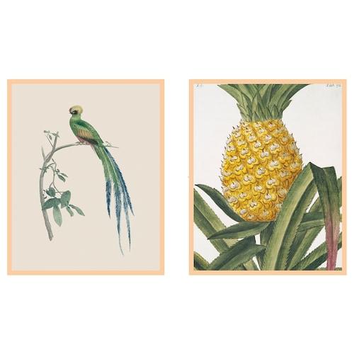ฟอเกราน ภาพโปสเตอร์ใส่กรอบ Tropical 40 ซม. 50 ซม. 2 ชิ้น