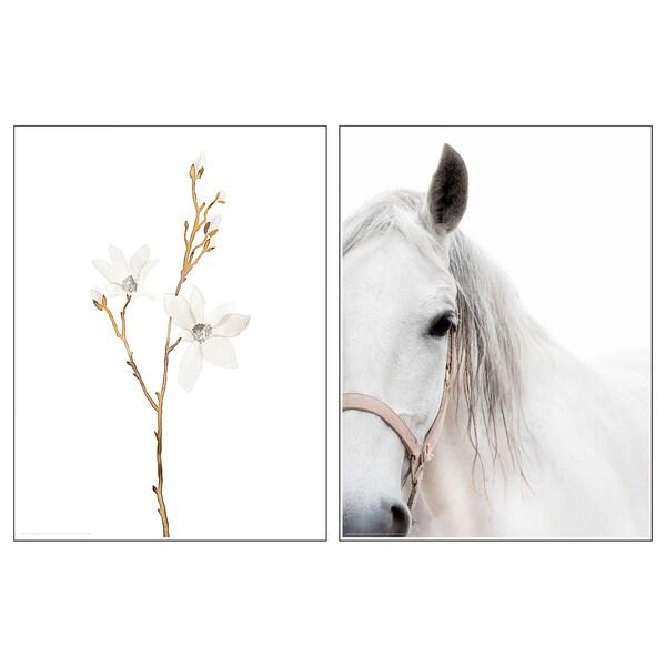 BILD БІЛЬД Постер, білі квіти і кінь, 30x40 см