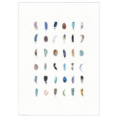 BILD БІЛЬД Постер, кольорове пір'я, 50x70 см