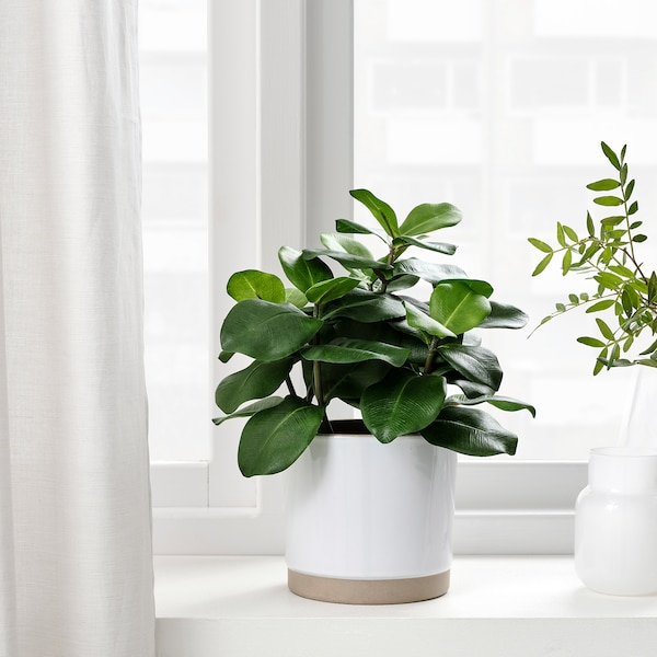 FEJKA ФЕЙКА Штучна рослина в горщику, для приміщення/вулиці клузія, 12 см
