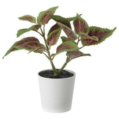 FEJKA ФЕЙКА Штучна рослина в горщику, для приміщення/вулиці кольорова кропива, 6 см