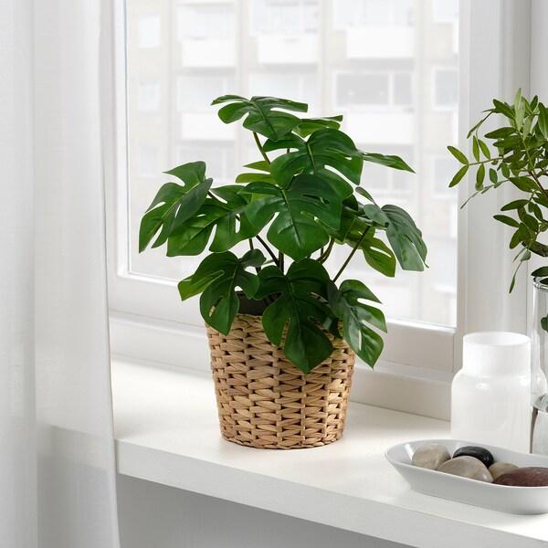 FEJKA ФЕЙКА Штучна рослина в горщику, для приміщення/вулиці Монстера, 12 см