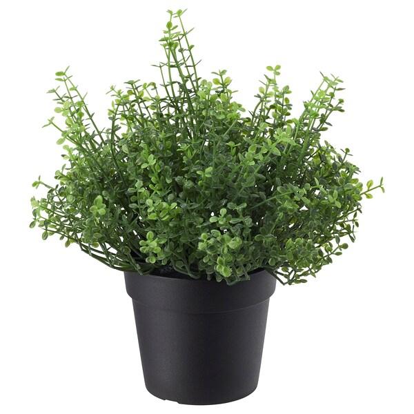 FEJKA ФЕЙКА Штучна рослина в горщику, для приміщення/вулиці Солейролія, 9 см