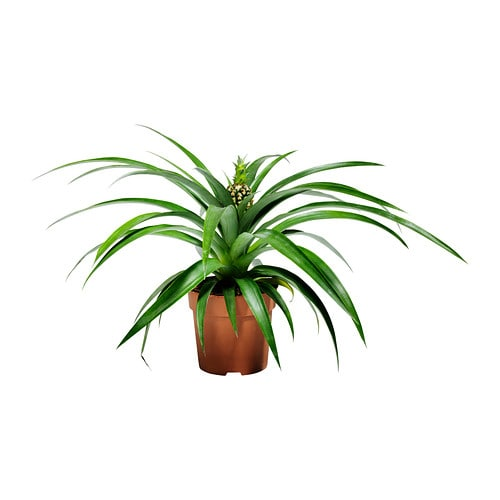 ananas potted plant ikea. Black Bedroom Furniture Sets. Home Design Ideas
