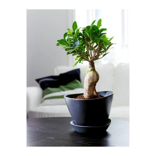 Ikea bigarra plant pot with saucer ebay for Black planters ikea