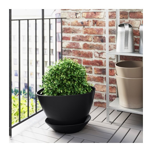 bigarr plant pot with saucer 12 ikea. Black Bedroom Furniture Sets. Home Design Ideas