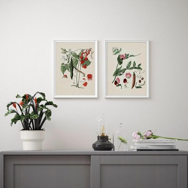 "BILD Poster, Botanical, 12x16 """