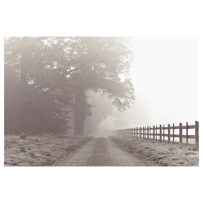 BILD Poster, Foggy country road, 35 ¾x24 ""