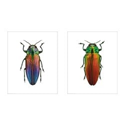 BILD poster, Beetles