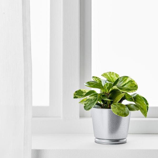 "BINTJE Plant pot, galvanized, 4 ¼ """