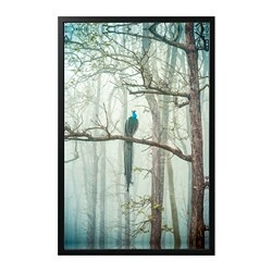 BJÖRKSTA picture and frame, Peacock, black
