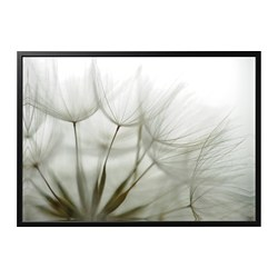 BJÖRKSTA picture and frame, Dandelion, black