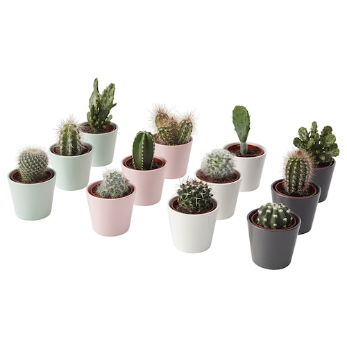 IKEA CACTACEAE Plant with pot