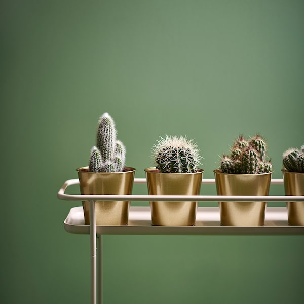 "DAIDAI Plant pot, brass color, 4 ¾ """