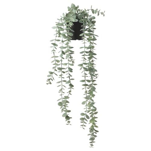 """FEJKA artificial potted plant indoor/outdoor hanging/eucalyptus 3 ½ """" 22 ¾ """""""