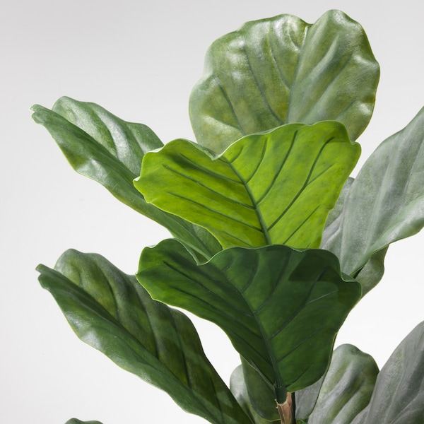 FEJKA Artificial potted plant, indoor/outdoor fiddle-leaf fig, 7 ½ ""