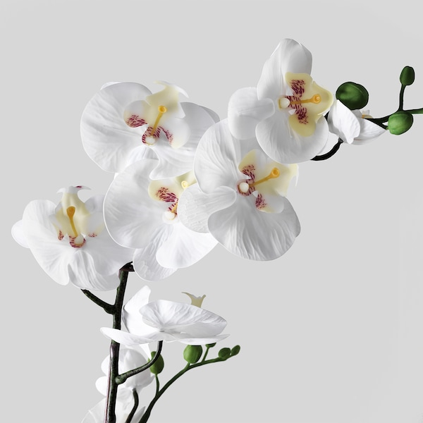 FEJKA Artificial potted plant, Orchid white, 4 ¾ ""