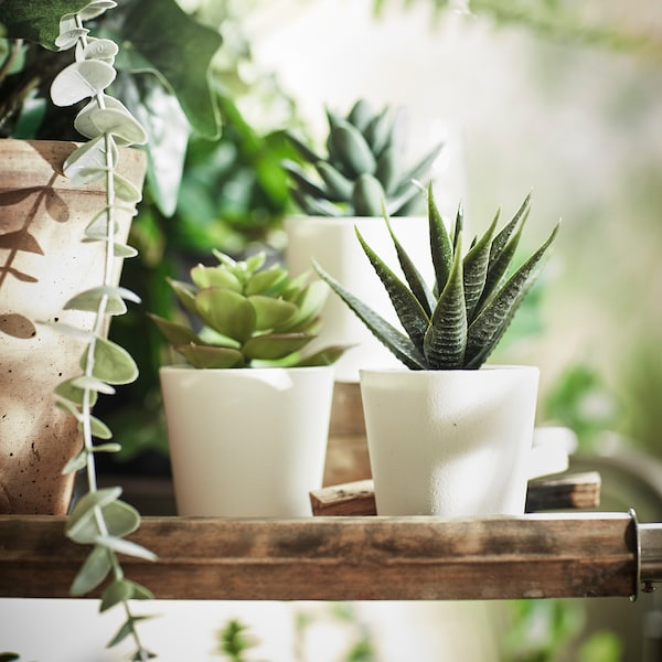 """FEJKA Artificial potted plant with pot, indoor/outdoor Succulent, 2 ¼ """" 3 pack"""