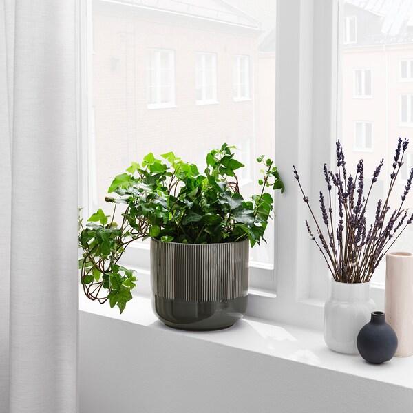 """GRADVIS Plant pot, indoor/outdoor dark gray, 6 """""""