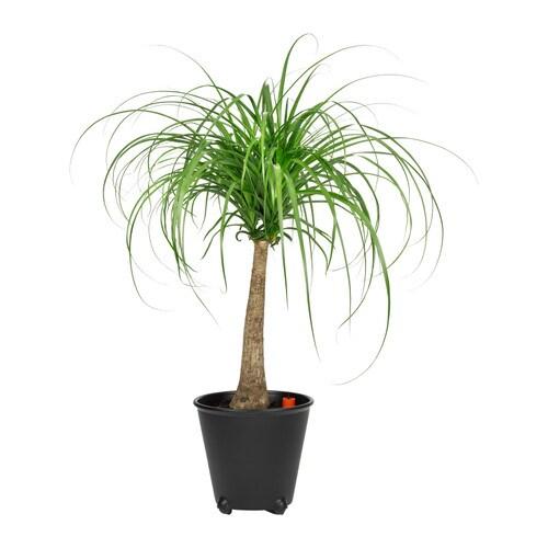 ikea-ps-fejo-self-watering-plant-pot-black__0122041_PE212715_S4
