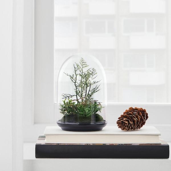 """INVÄNDIG Artificial terrarium, dome, 6 """""""