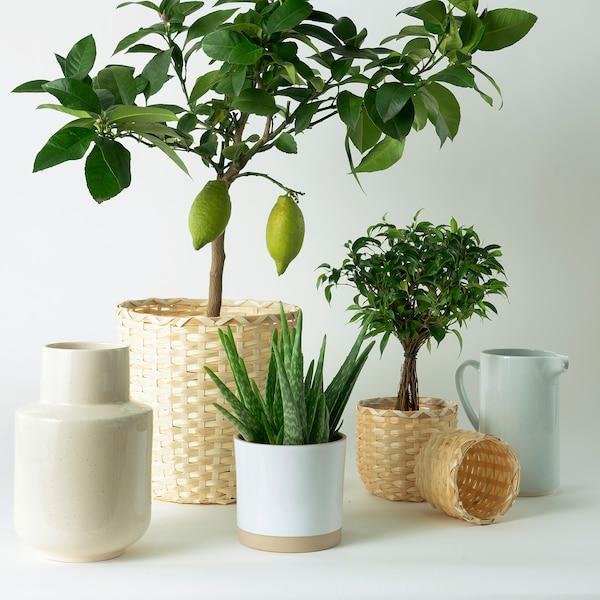 "KAFFEBÖNA Plant pot, bamboo, 4 ¾ """