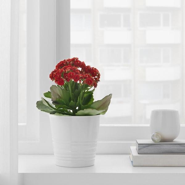 "MUSKOT Plant pot, white, 4 ¼ """