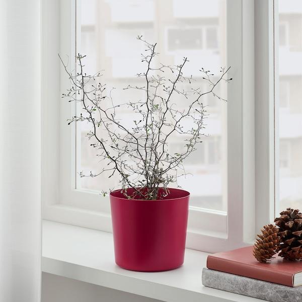 """OMFÅNG Plant pot, indoor/outdoor dark red, 6 """""""