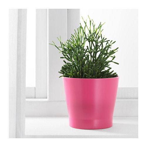 PAPAJA Plant pot - 4 ¼ \