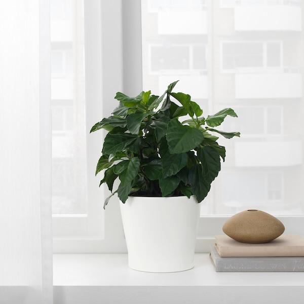 """PAPAJA plant pot white 5 """" 6 """" 4 ¾ """" 5 ½ """""""