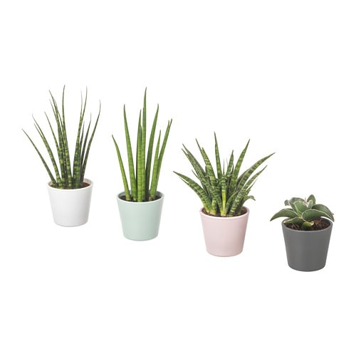 sansevieria plant with pot ikea. Black Bedroom Furniture Sets. Home Design Ideas