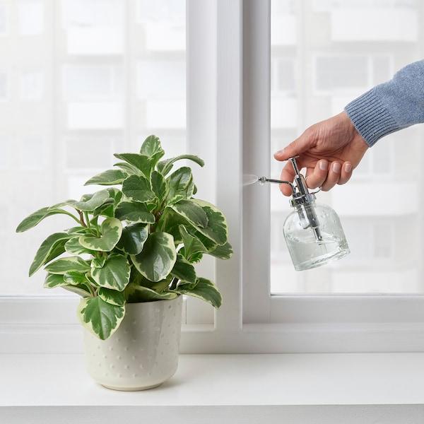 SESAMFRÖN Plant mister, clear glass, 8 oz