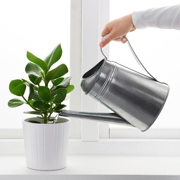 """SOCKER watering can indoor/outdoor/galvanized 9 """" 88 oz"""