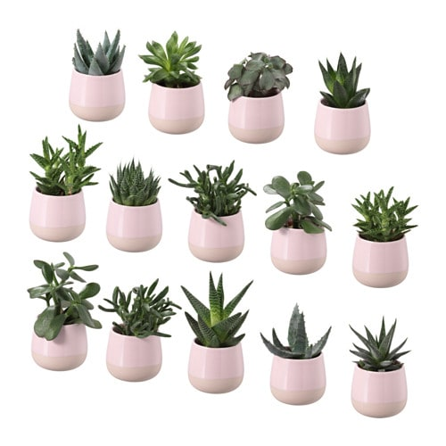 succulent plant with pot ikea. Black Bedroom Furniture Sets. Home Design Ideas