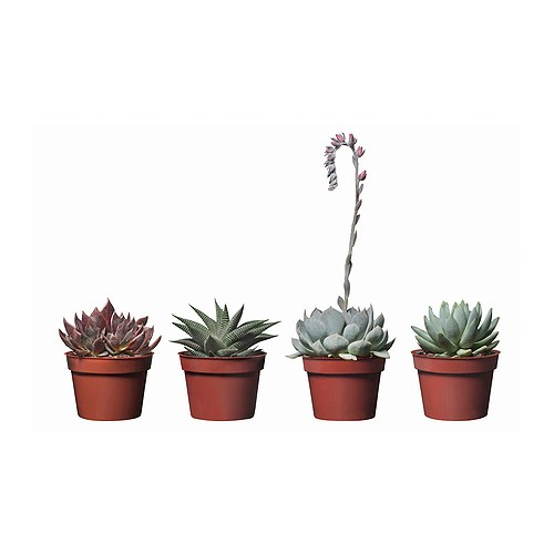 succulent potted plant ikea. Black Bedroom Furniture Sets. Home Design Ideas